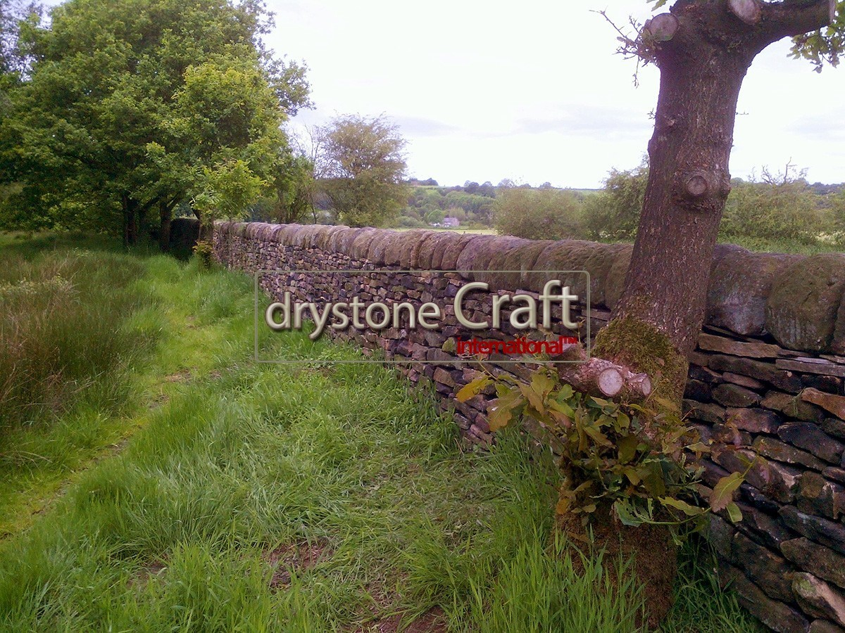 heritage dry stone wall restoration 67 metres gritstone hb